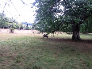 BULLACE ORCHARD